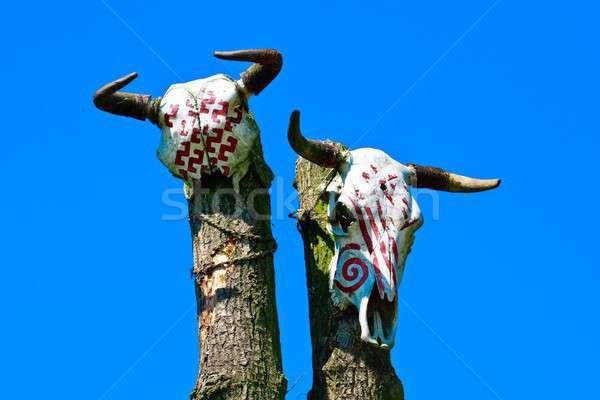 Dier schedels textuur hout natuur woestijn Stockfoto © Bertl123