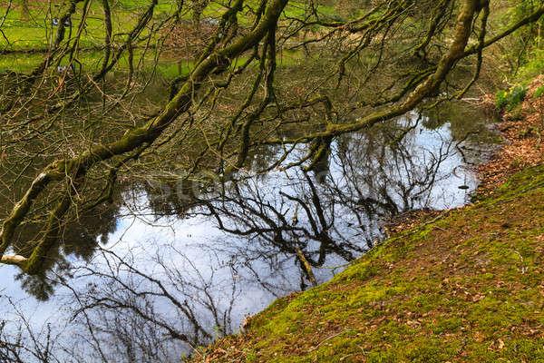 Gyönyörű fa ágak akasztás tó ősz Stock fotó © Bertl123