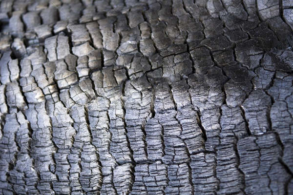 Closeup of a burned tree trunk surface Stock photo © bestmoose