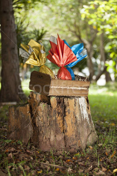 яйца корзины лесу трава шоколадом яйцо Сток-фото © betochagas