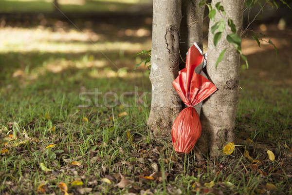 яйца яйцо красный бумаги дерево трава Сток-фото © betochagas
