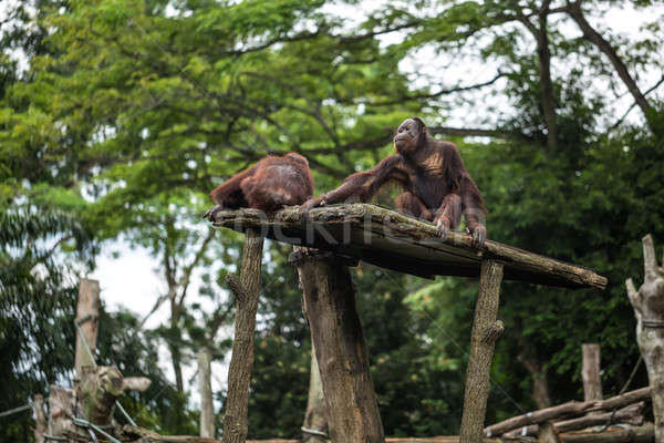 Monkeys sit in zoo Stock photo © bezikus