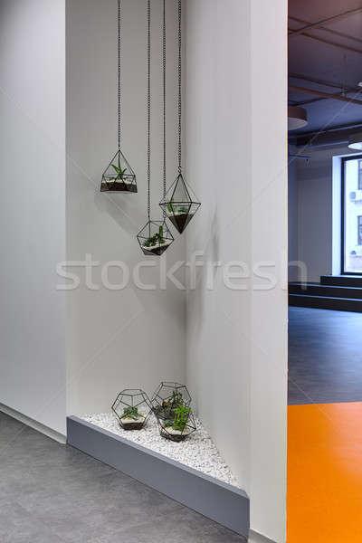 Esquina plantas decoraciones gris pared vidrio Foto stock © bezikus