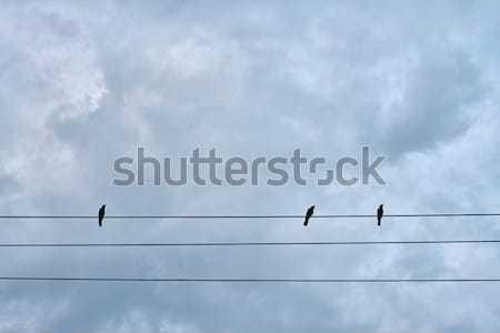 Zwarte vogels vergadering elektrische kabel groep Stockfoto © bezikus
