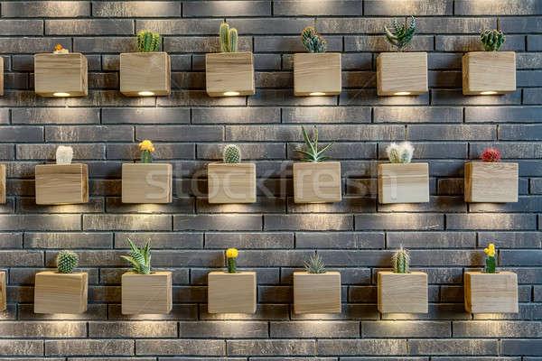 Wall with cactuses Stock photo © bezikus