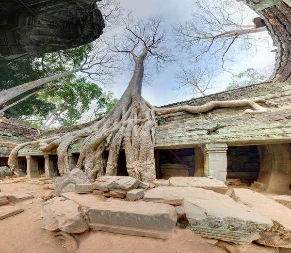 Foto stock: Gigante · árvores · Angkor · Wat · velho · complexo · céu