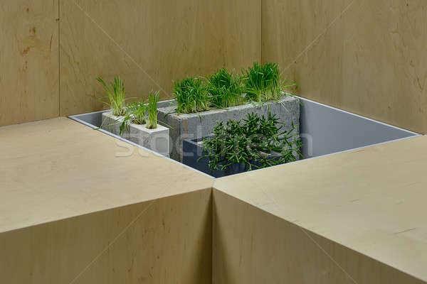 Fű növény díszítések edény zöld fű beton Stock fotó © bezikus