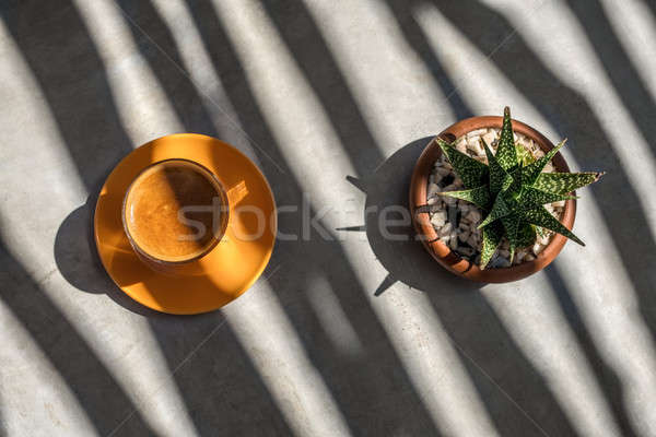 Latte on saucer and plant in pot Stock photo © bezikus