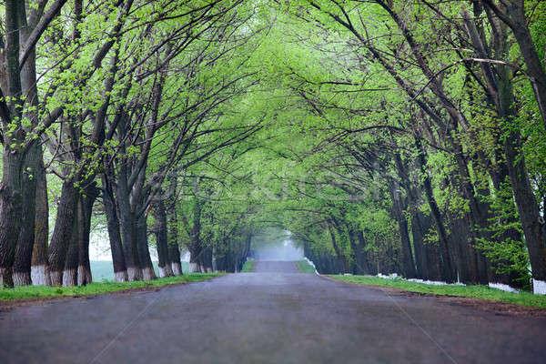 Back country road Stock photo © bezikus