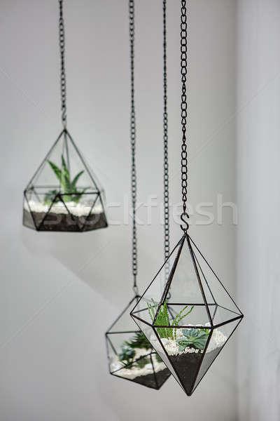 подвесной растений три стекла металлический кадры Сток-фото © bezikus