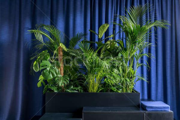 Büyük yeşil bitkiler ahşap siyah yastık Stok fotoğraf © bezikus
