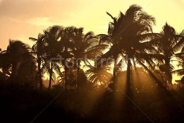 Sunset through the palm trees Stock photo © bezikus