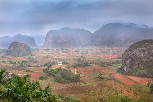 Völgy Kuba gyönyörű világ örökség lista Stock fotó © bezikus