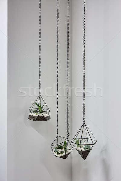 Opknoping planten drie glas metalen frames Stockfoto © bezikus