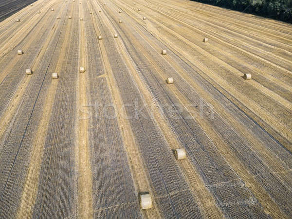 Goud veld Geel groot groene Stockfoto © bezikus