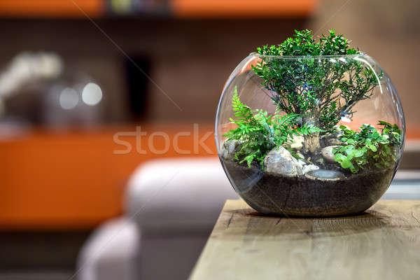 Green plant close Stock photo © bezikus