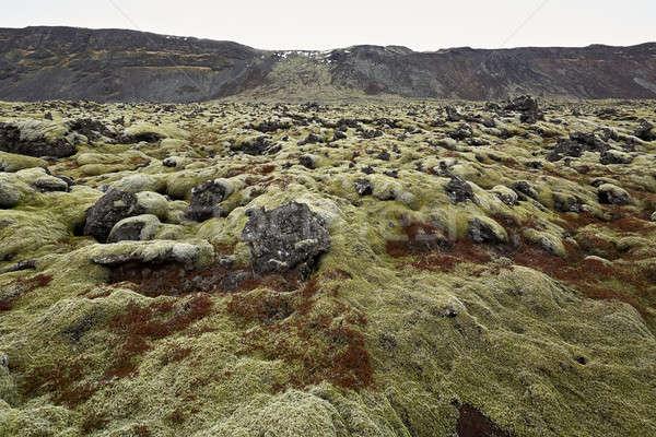 Icelandic landscape of moss field Stock photo © bezikus
