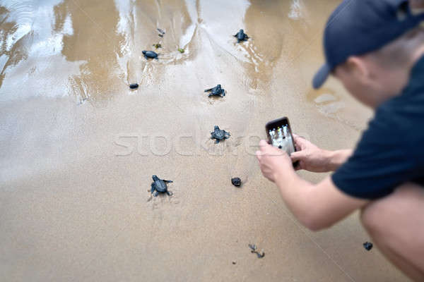 Stockfoto: Groep · weinig · zee · schildpadden · lopen · zand