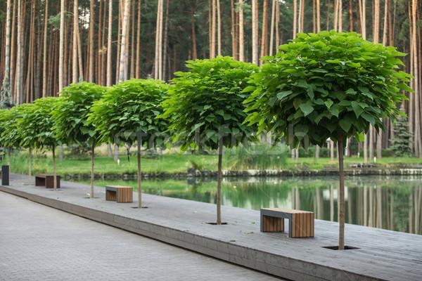 зеленый деревья перспективы несколько пруд соснового Сток-фото © bezikus