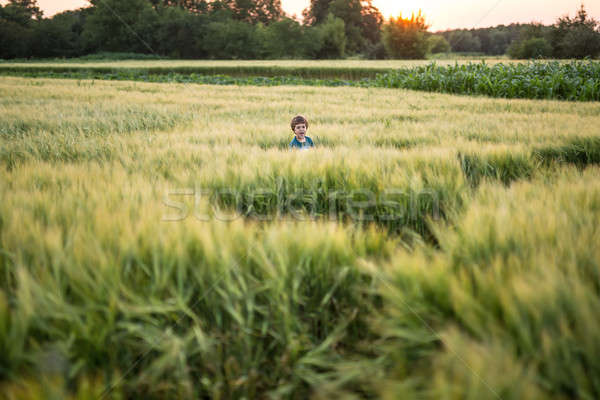 Child in rye field Stock photo © bezikus