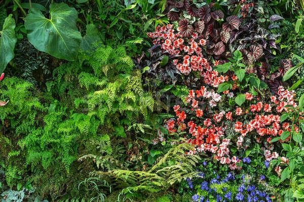 Green plants and blooming flowers Stock photo © bezikus