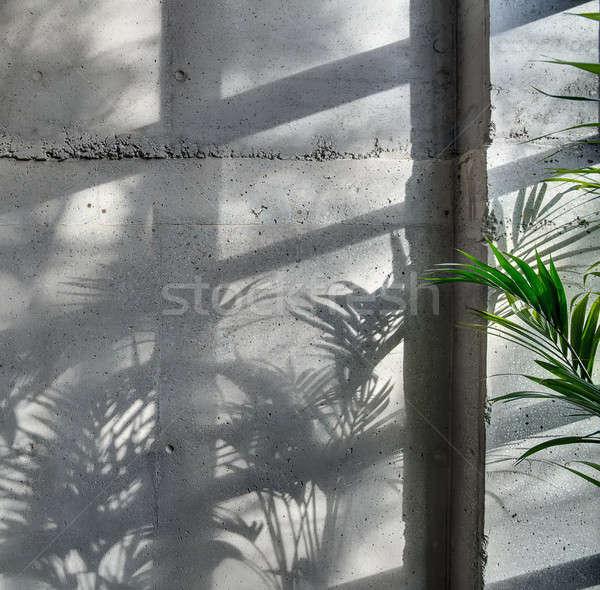 Konkretnych ściany słońce świetle zielone roślin Zdjęcia stock © bezikus