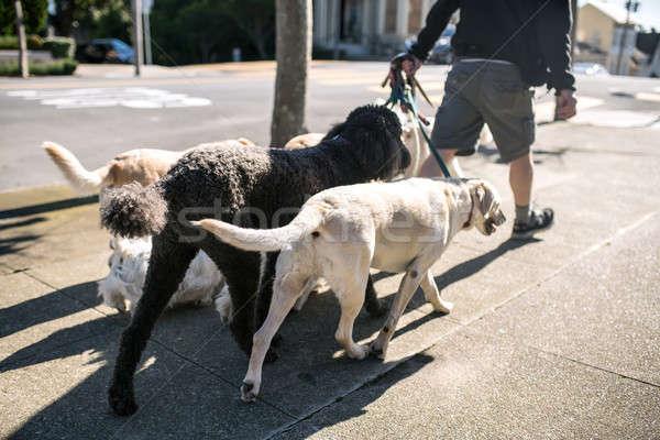 Man honden buitenshuis vent lopen weinig Stockfoto © bezikus