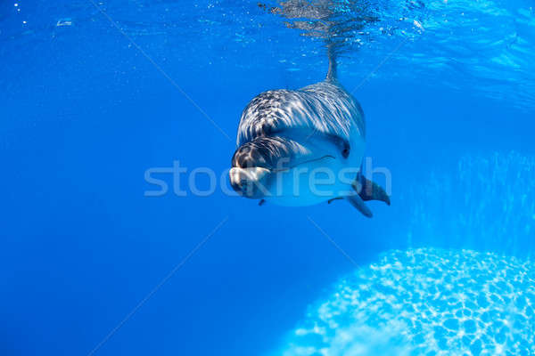 Dolphin swims under the water Stock photo © bezikus