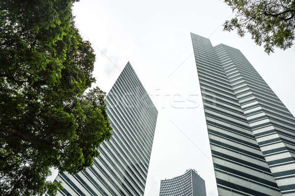 Tops of skyscrapers and trees Stock photo © bezikus