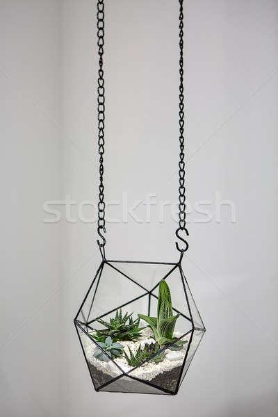 Hanging vase with plants Stock photo © bezikus