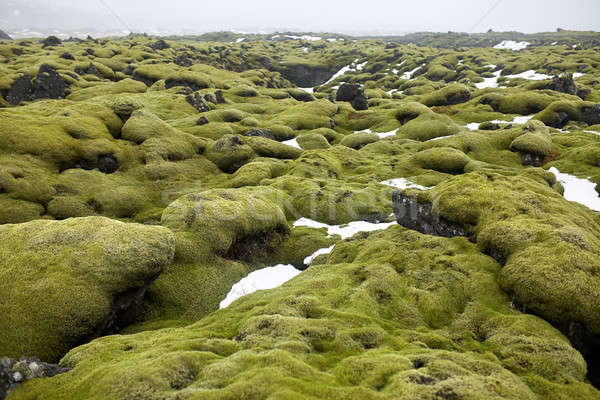 Icelandic landscape of moss field Stock photo © bezikus