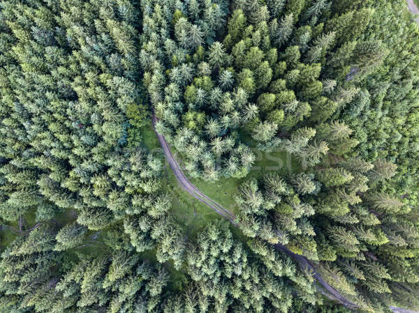 Top shot of coniferous forest Stock photo © bezikus