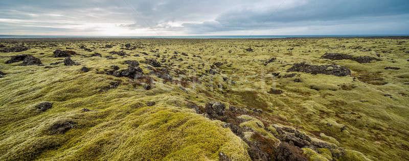 Krajobraz mech dziedzinie Islandia zielone pokryty Zdjęcia stock © bezikus
