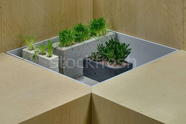 çim bitki süslemeleri bitkiler pot yeşil ot Stok fotoğraf © bezikus