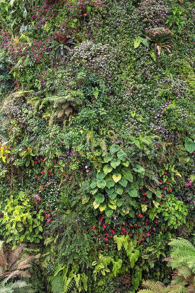 Colorful plants and flowers Stock photo © bezikus