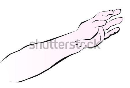 Human Arm Stock photo © Bigalbaloo