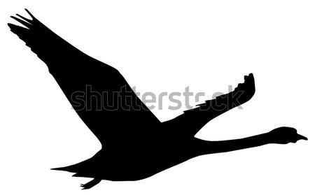 Swan Stock photo © Bigalbaloo
