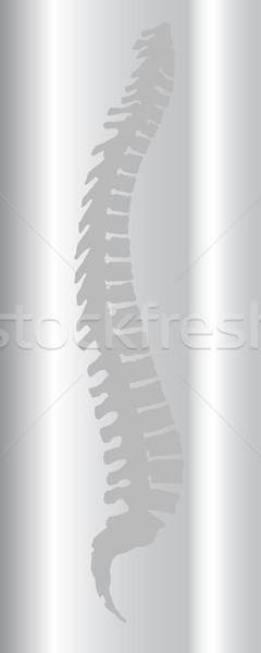 Omurga taramak gri uzay geri grafik Stok fotoğraf © Bigalbaloo