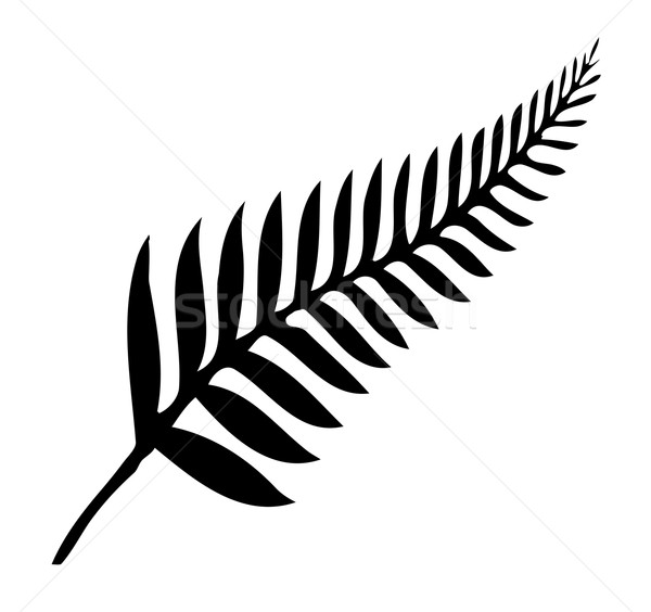 Silver Fern of New Zealand Stock photo © Bigalbaloo