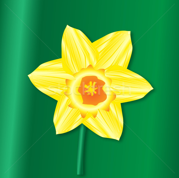 Daffofil Saint Davids Day Stock photo © Bigalbaloo