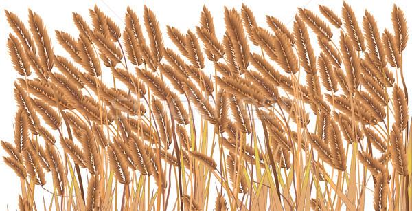 Isolated Crop Field Stock photo © Bigalbaloo