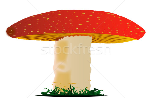 Fungi Stock photo © Bigalbaloo