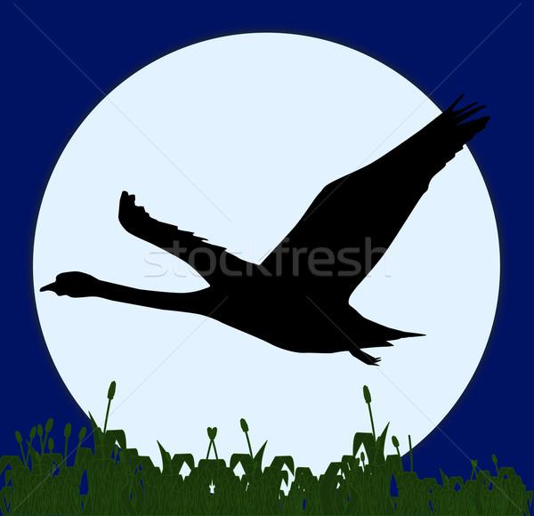 лебедя Flying полнолуние области трава природы Сток-фото © Bigalbaloo