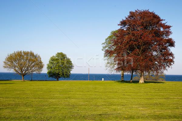 Three trees Stock photo © bigandt