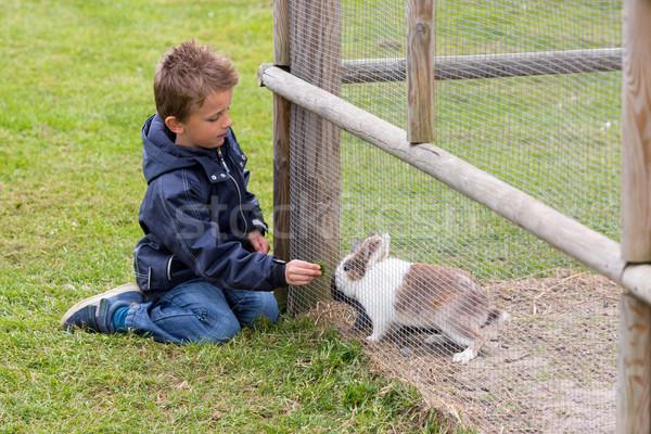 Foto d'archivio: Ragazzo · coniglio · giovani · conigli