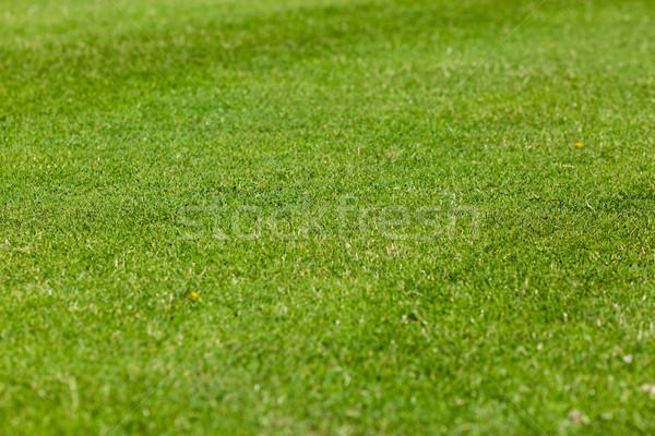 サッカー ピッチ パーフェクト 緑 芝生 中古 ストックフォト © bigandt