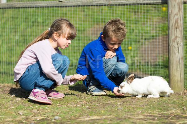 Kids feeding rabbits Stock photo © bigandt