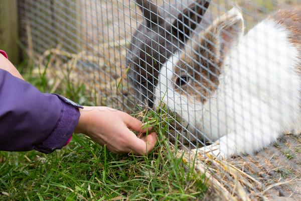 Kid feeding rabbit Stock photo © bigandt