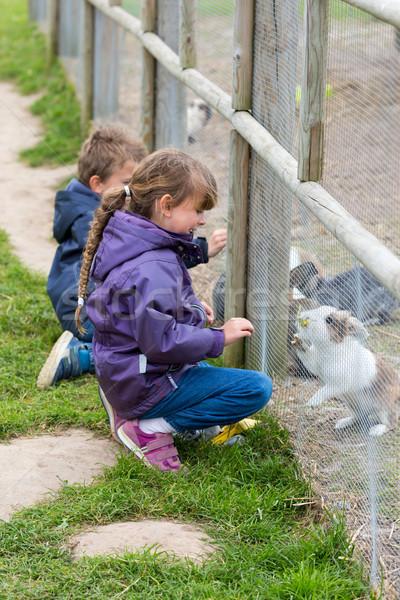 Due ragazzi conigli ragazzo ragazza Foto d'archivio © bigandt