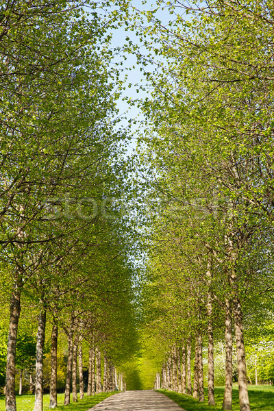 Alley in spring time Stock photo © bigandt